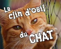 Chat clin d'oeil - carte virtuelle humoristique personnalisable